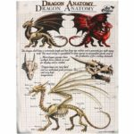Dragon Anatomy Canvas Picture
