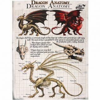 Dragon Anatomy Canvas Picture